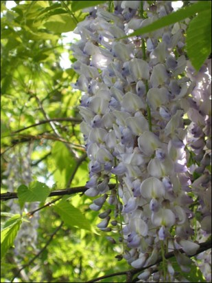 spring2-by-wasyl-bilyk